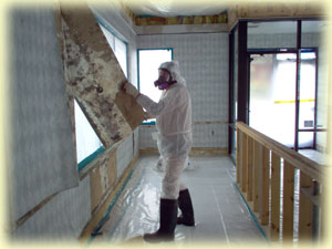 Mold Remediation services from Texas Environmental Control
